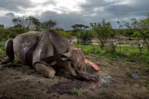 photograph-by-brent-stirton-national-geographic
